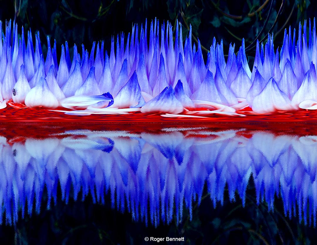 Red White & Blue Reflection Florascape