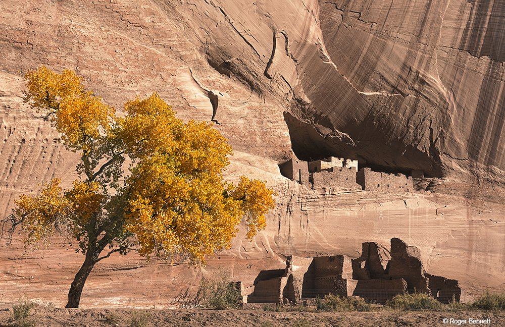 Fall Tree and White House Ruins, Canyon de Chelly, AZ